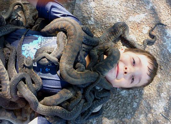 File snake glory