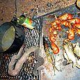 Dinner - Djukbinj National Park -  east of Kakadu National Park : Kakadukid