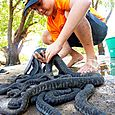 Great catch of file snakes - Djukbinj National Park - east of Kakadu National Park : Kakadukid