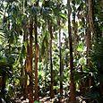 Mataranka Palm Forest - outside Kakadu National Park : Kakadukid