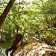 Swinging on the Banks of South Alligator River (Gungurul) - Kakadu National Park