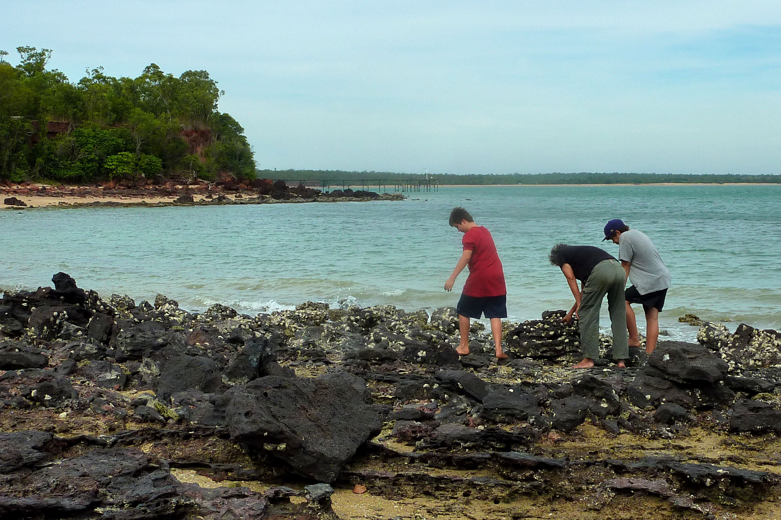 Harvesting oysters from the rocks at Black Point