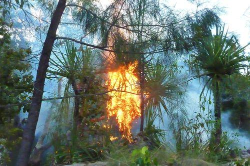 AA - Pandanus on fire