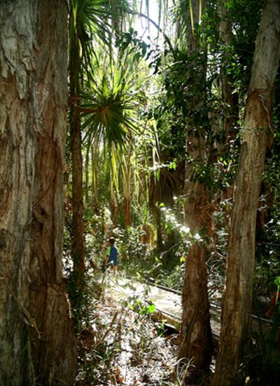 Barramundi Gorge  (Maguk) Boardwalk - Kakadu National Park : Kakadukid