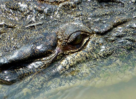 Croc eye - Kakadu National Park : Kakadukid