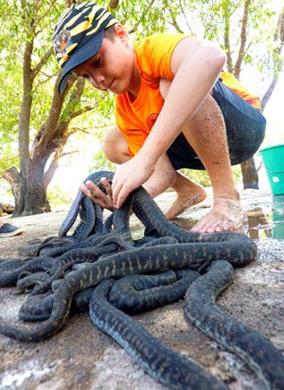 Great catch of file snakes - Djukbinj National Park - east of Kakadu National Park : Kakadukid