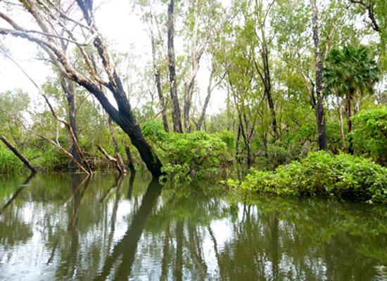 Gudjewg (wet season) - Kakadu National Park : Kakadukid
